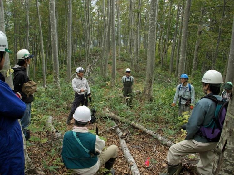 ブナの林で働く人たち