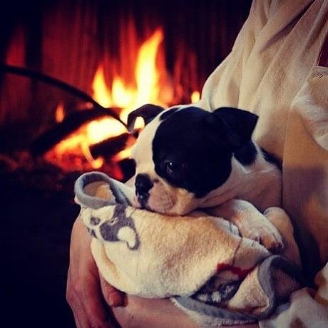 暖炉と愛犬